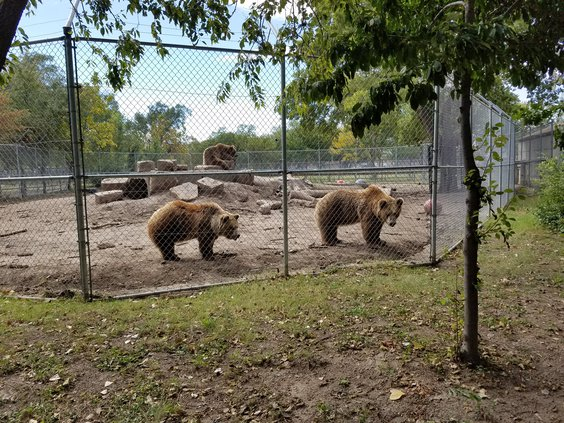 zoo bears 2.jpg