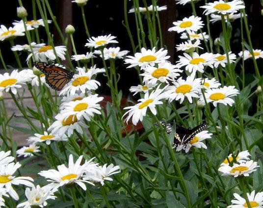 zoo butterflies July 2020