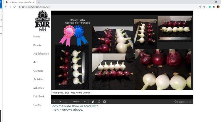 2020 open class onions