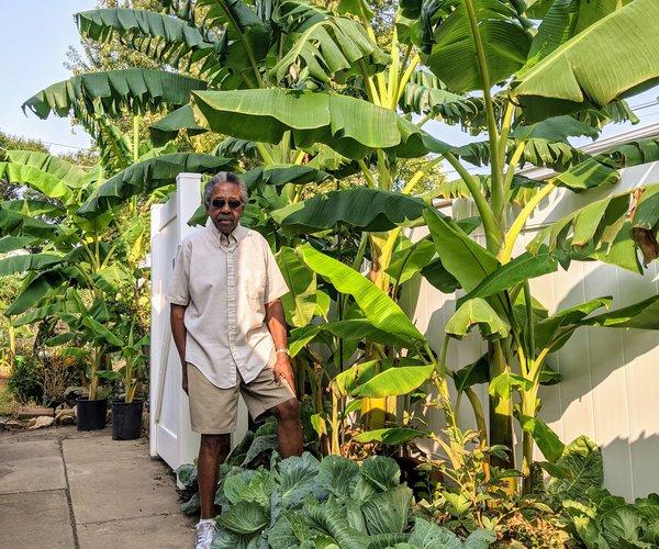 new_vlc_Carl Garner with his banana trees.jpg
