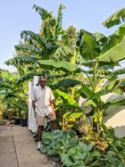 new_vlc_Carl Garner with his banana trees.jpg