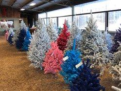 Delp Tree Farm