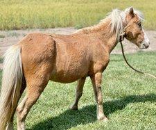 blindhorse2021