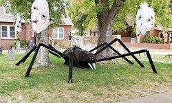 16th-St-Spider